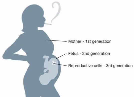 epigenetics-Mom 1